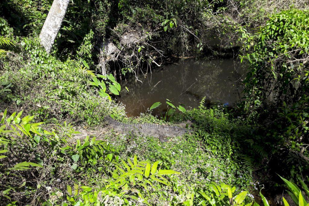 Crocodile Khao Yai