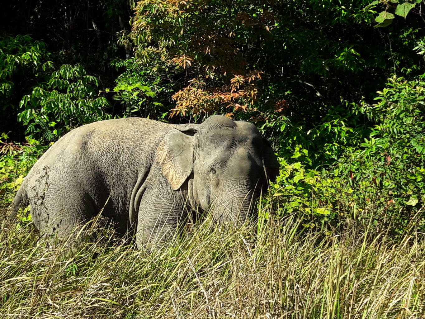 Elephant Quest at Khao Yai